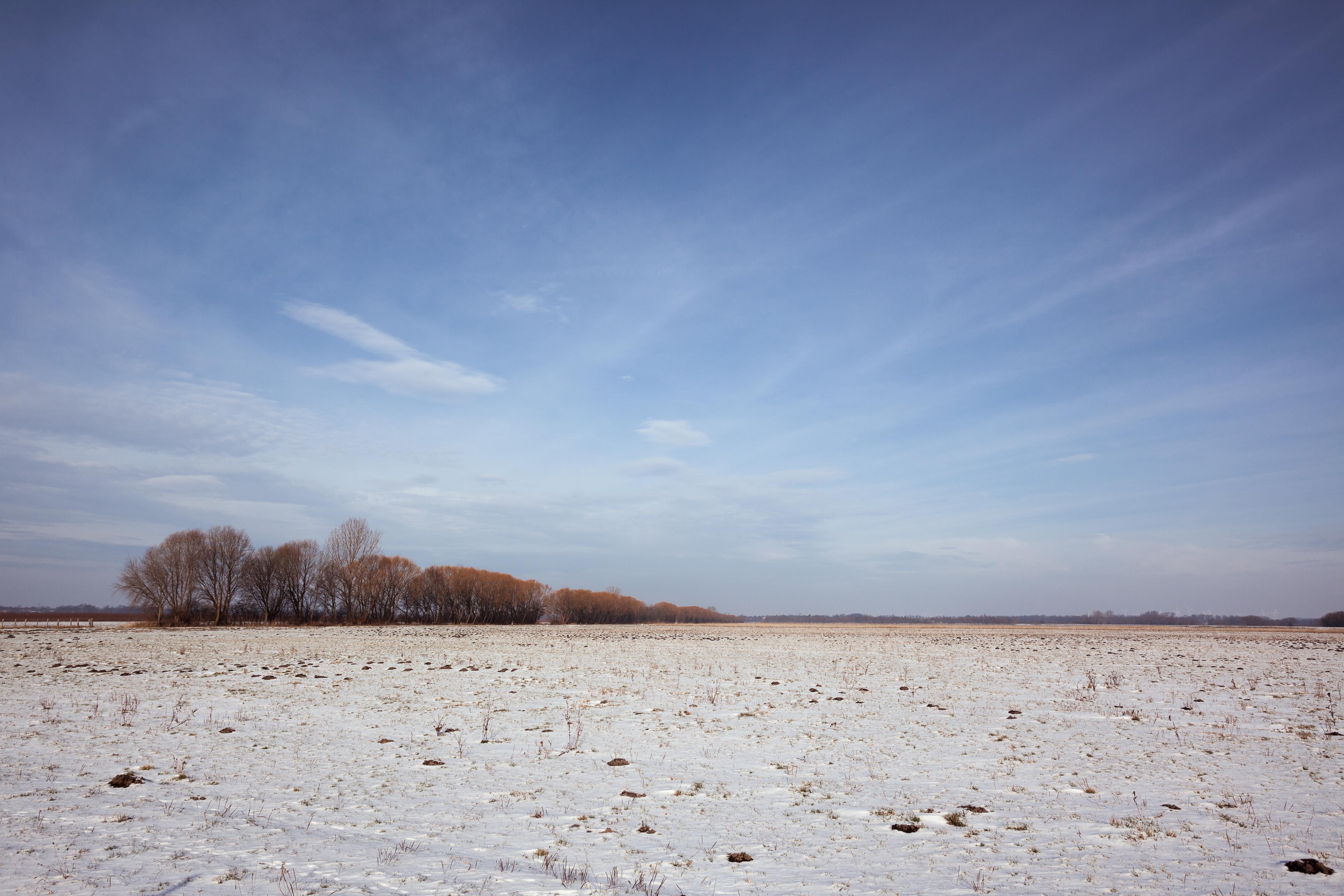 Verschneite Felder, Bäume markieren den Weg. Havelradwanderweg, Brandenburg, Deutschland.