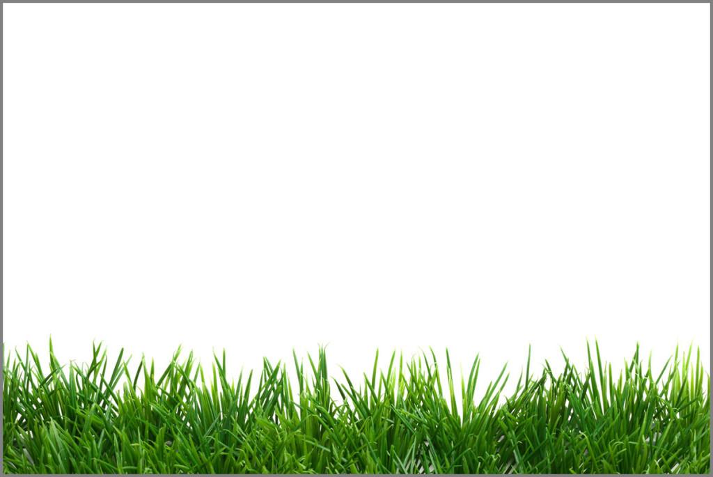 bestseller-grass